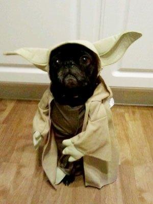 cosplay-dog-animaux-chien-déguisement-mogwaii (40)