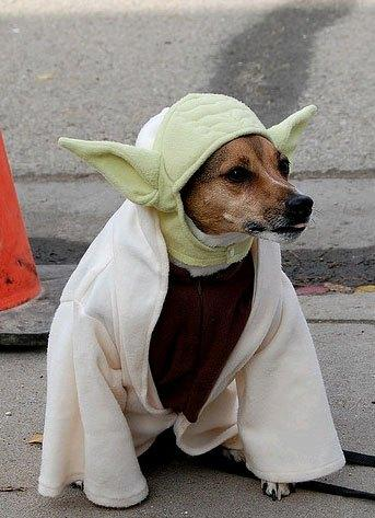 cosplay-dog-animaux-chien-déguisement-mogwaii (47)