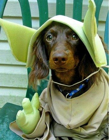 cosplay-dog-animaux-chien-déguisement-mogwaii (38)