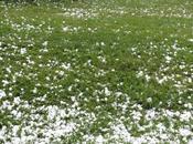 effet orages grêle jardins