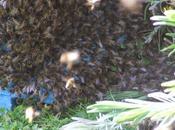 Région Haute-Normandie chercheurs l'INRA volent secours abeilles