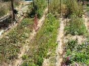 L'agroécologie, plus qu'une alternative agronomique