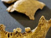 squelette pourrait être celui Viking Olaf Gothfrithson