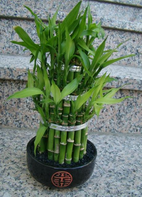 Double_Luck_Bamboo