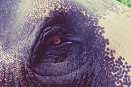 Elephant et thé, les petits bonheurs de Kumily