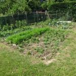 Jardin Chronique d'un potager ordinaire premières joies premiers soucis