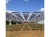 Photovoltaïque. L'île d'Ukujima accueille plus grand projet solar sharing monde