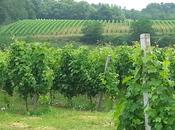 préjugés vins Bordeaux peau dure