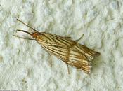 petit papillon fait remarquer avec habit d'or