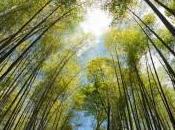 propos d'Arashiyama