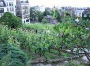 Dans vignes clos Montmarte avec Lidl