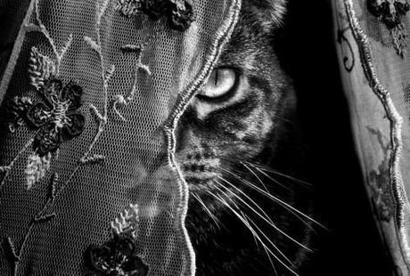 cutencats:  C A T S - Pinterest sur We Heart It.