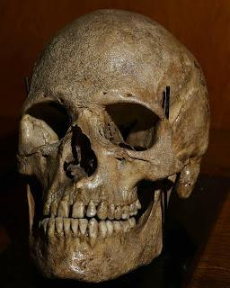 Visiter: Le musée anthropologique du Dr Tourterelle