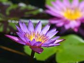 jardin mille couleurs