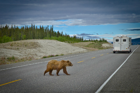 Blog awards juillet Roadtrip au Yukon Grizzli voyages etc