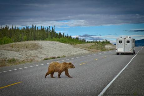 Blog awards juillet Roadtrip au Yukon Grizzli voyages etc