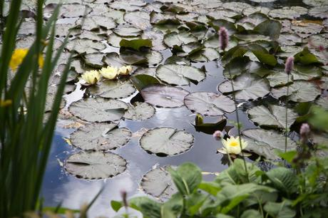 jardin_monet_giverny_12
