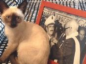 Journée internationale chat