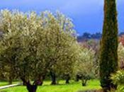 Découvrez l'Huile d'olive AOC* Luberon, Médaille d'Or 2014 salon l'Agriculture