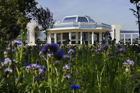 Rénovation de Challenger.Jardins filtrants et jardins en friche.Guyancourt le 31 août  2011
