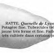 1ère inscription de la Ratte dans le catalogue Vilmorin