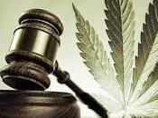 Comprendre Décriminalisation l'Usage Marijuana