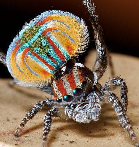les araign es des petites b tes mignonnes paperblog. Black Bedroom Furniture Sets. Home Design Ideas