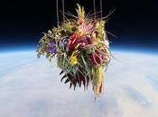 fleurs envoyées dans l'espace l'artiste Makoto Azuma.
