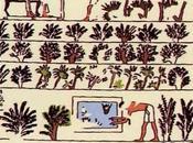 Salle vitrine côté seine palmier-dattier fruits