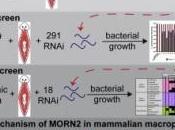 ANTIMICROBIENS: petit plat nous montre voie CNRS Cell Host Microbe