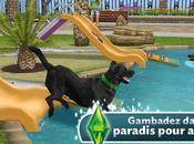chiens remuent queue chats ronronnent Sims Gratuit iPhone