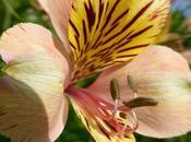 Apremont, pouvoir fleurs