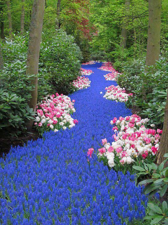 Holland. River of Flowers, Keukenhof