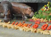 Thaïlande banquet hippopotames [HD]