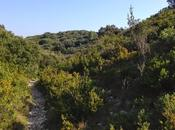 Lost garrigue