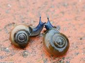 pluies d'automne font sortir petits escargots luisants...