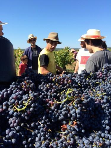 cévennes,olivier privat,renaud berthoud,mazet des crozes,la glacière,les vins des lys,uzès,duché d'uzès,le tracteur