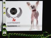 chiens branchés s'habillent Made