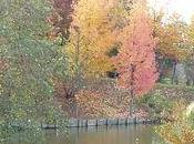 Pourquoi feuilles jaunissent elles automne