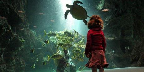 L'Aquarium de La Rochelle élu plus bel aquarium de France