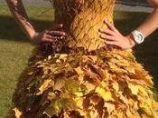 robe feuille d'automne