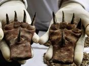 griffes vieilles 1,500 intriguent archéologues Pérou