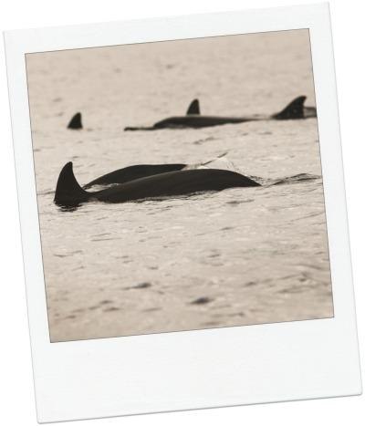 dauphins2