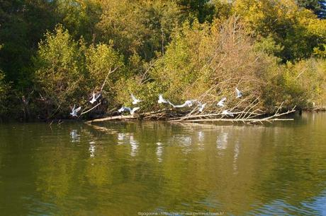 nantes-bateau-sur-l-erdre-ruban-vert-6_gagaone