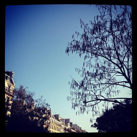 Tree and blue sky (1er novembre)