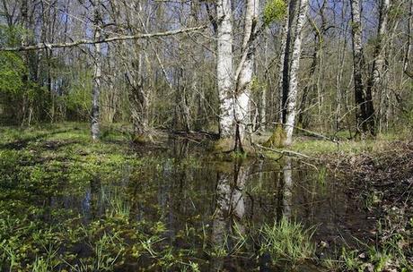 Le bois humide de la zone du Testet, un soutien naturel à l'étiage, drainé par la rivière Tescou. C'est là que devrait être construit le barrage de Sivens. / Ph. © Collectif Testet