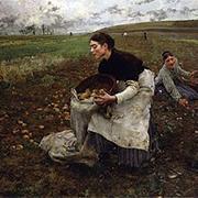 La pomme de terre a permis d'enrayer la famine en Irlande