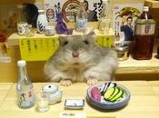 Ginji, Hamster plus heureux Japon