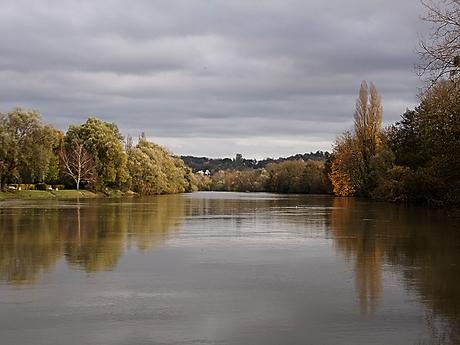 fleuve, arbres