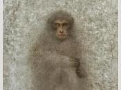 """C'est bête, ""singe"", sait qu'une immortelle l'habite!"" Anima"
